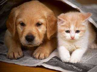 بعد تخلي البعض عن حيواناتهم .. مأوى يفتح ذراعيه للكلاب والقطط