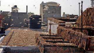 فيديو.. أسراب الجراد الصحراوي تغزو الهند وتهدد المحاصيل
