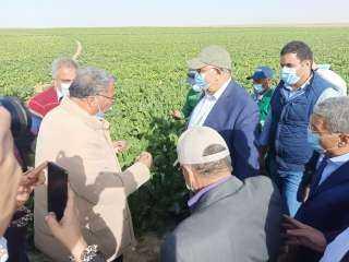 استمرار حصاد البنجر في مشروع غرب المنيا خلال إجازة العيد وتوريد 60 ألف طن لمصانع السكر
