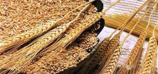 واردات مصر من القمح تتراجع بنسبة 30.3% في يوليو الماضي